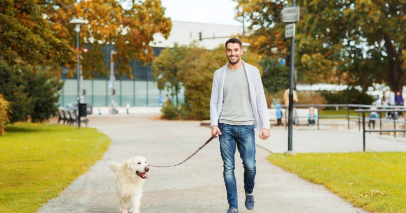 The Benefits of Having a Dog Walker