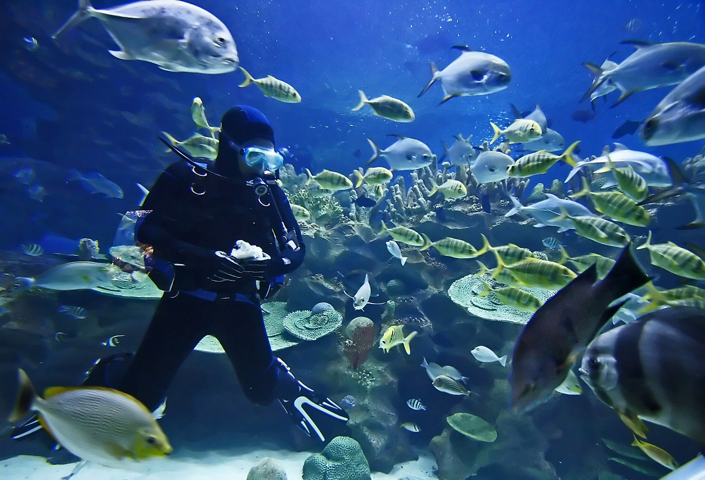 Plan Your Underwater Adventure so That You Stay Safe While Diving